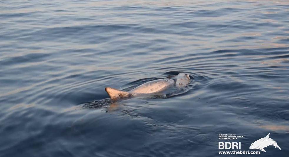 海豚媽絕食5天「陪著斷氣寶寶」 專家:「沉默」最讓人心痛