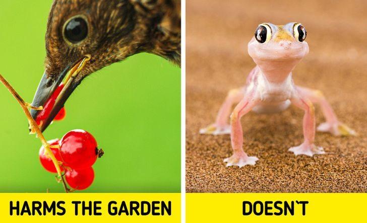 壁虎是「最完美室友」的5個原因 「在院子出現」千萬別趕走!