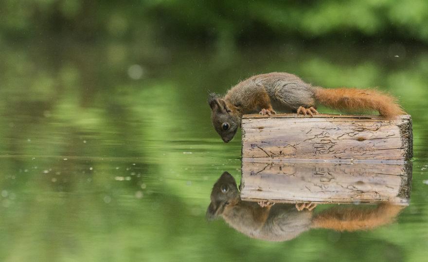 根本童話場景!松鼠攀浮木跟「異世界雙胞胎」相認❤