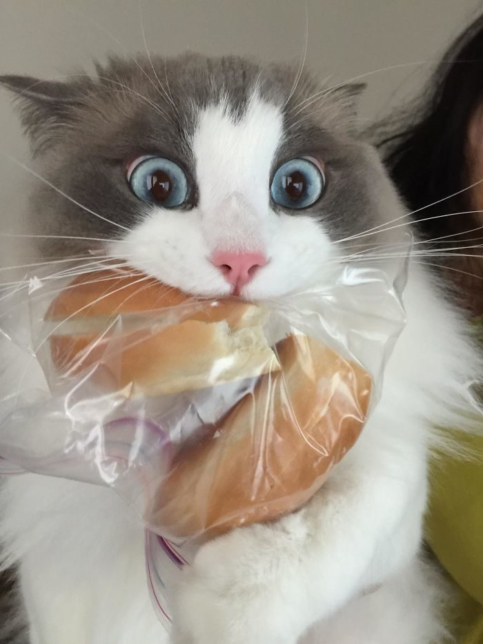 20個「瞬移技能點到LV.99」的偷吃毛孩 嗑貓草過量表情太爆笑