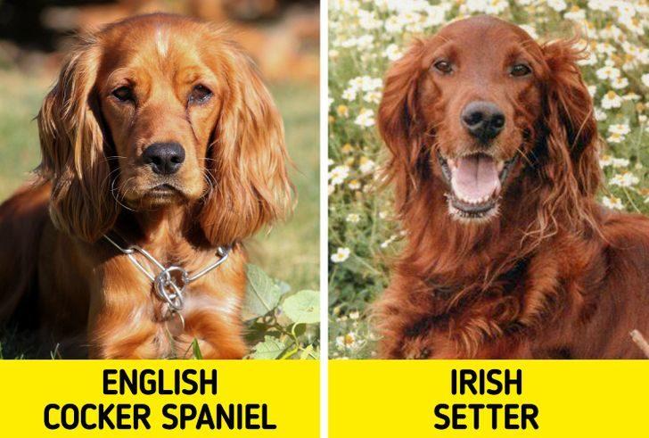 11種「最容易搞混」的狗狗品種 阿金跟拉布拉多...到底差在哪?