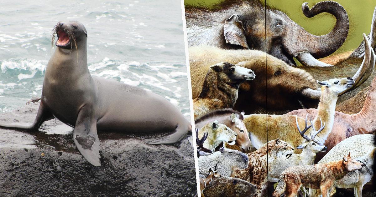 研究發現「96%哺乳類消失」全因人類 別再推給氣候變遷!