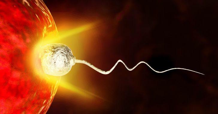 精子競爭被推翻?研究發現「比賽開始前」卵子早就選好冠軍!