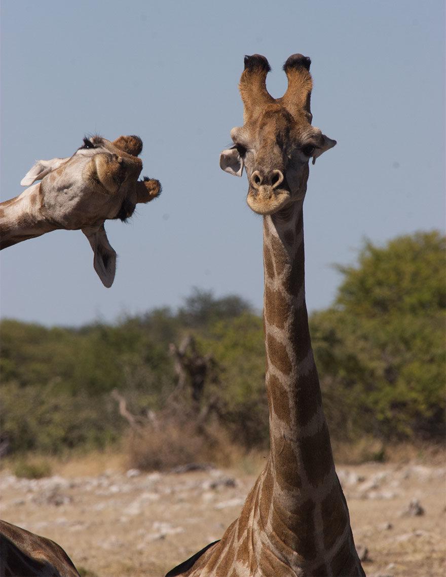 喜劇動物攝影