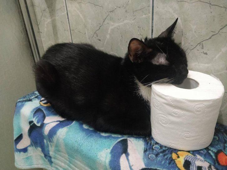 16張證明「貓星人無視地球定律」爆笑照 一臉大魔王的樣子太萌啦
