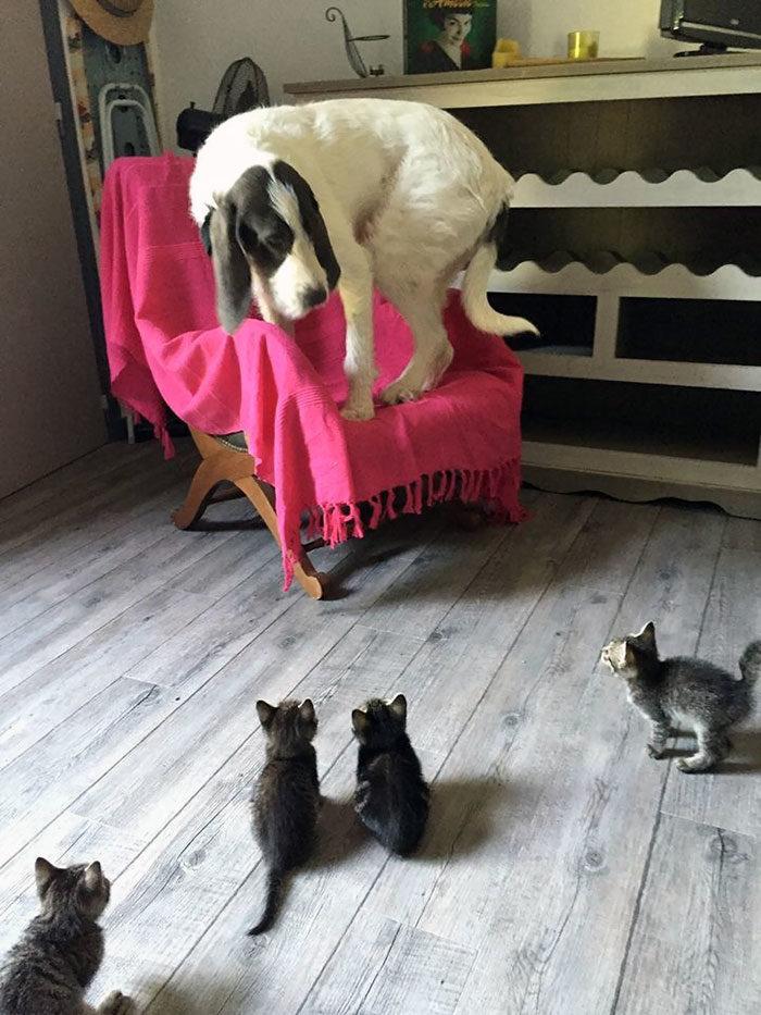 主人快救偶!「被8+9貓欺負」汪星人超想哭 連骨頭都幹走太壞心了