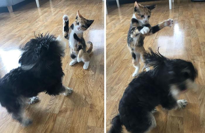 猫咪对狗坏