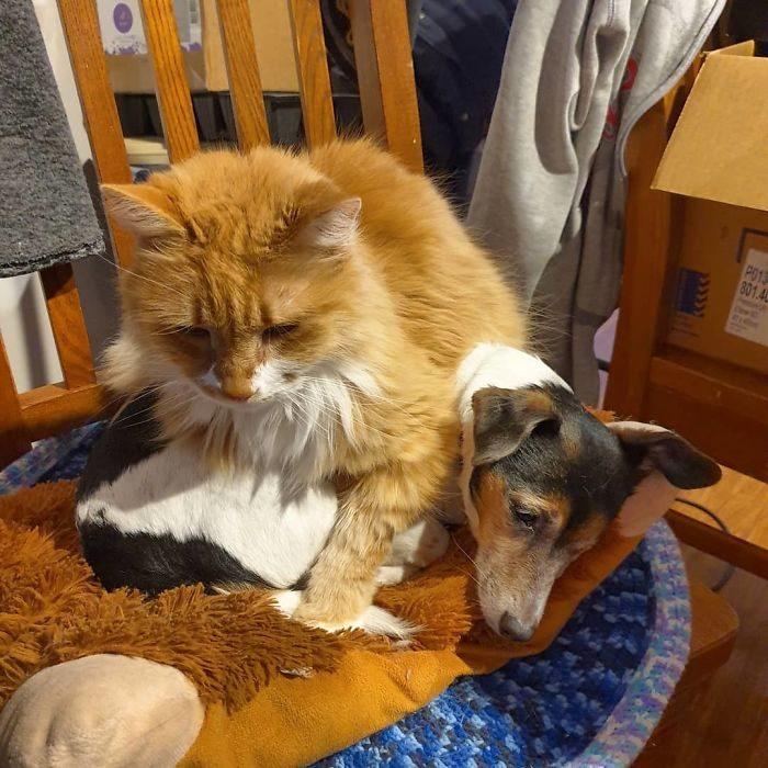 貓咪對狗壞