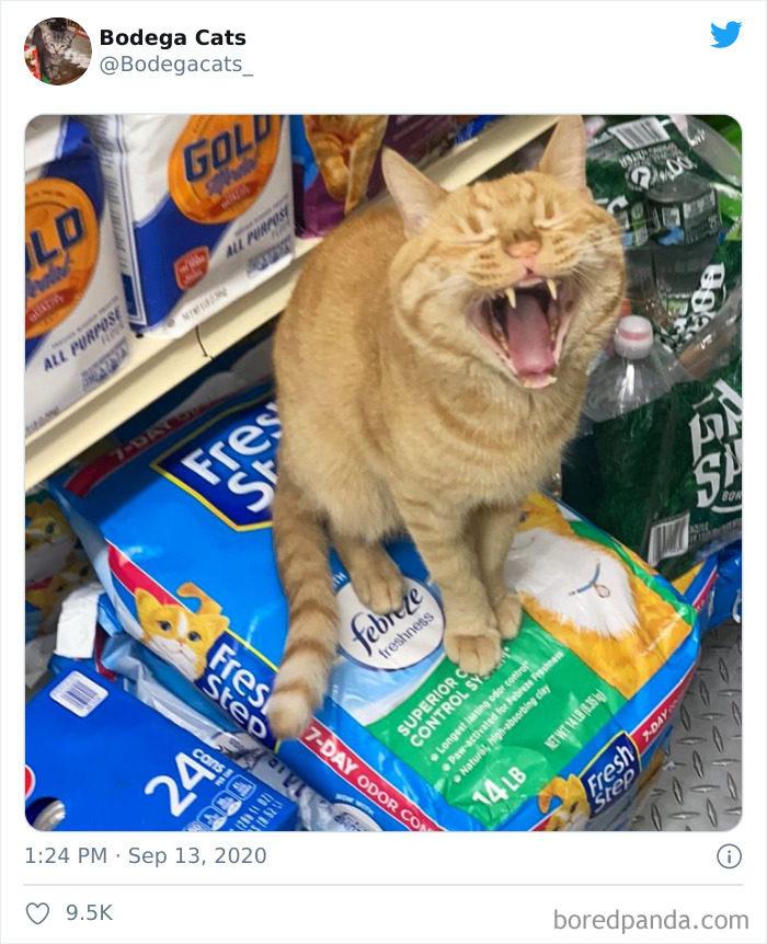 猫占领超市