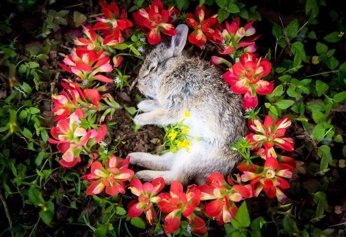 送毛孩最後一程!用最唯美方式替小動物告別世界 她:尊重每一個生命