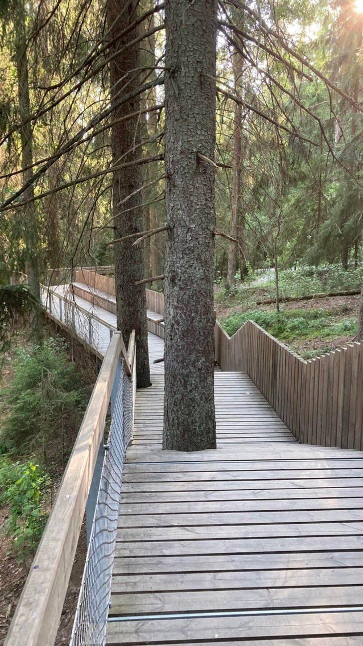 20個「人類和大自然相愛」的證明 老樹「噴出泉水」嚇壞遊客