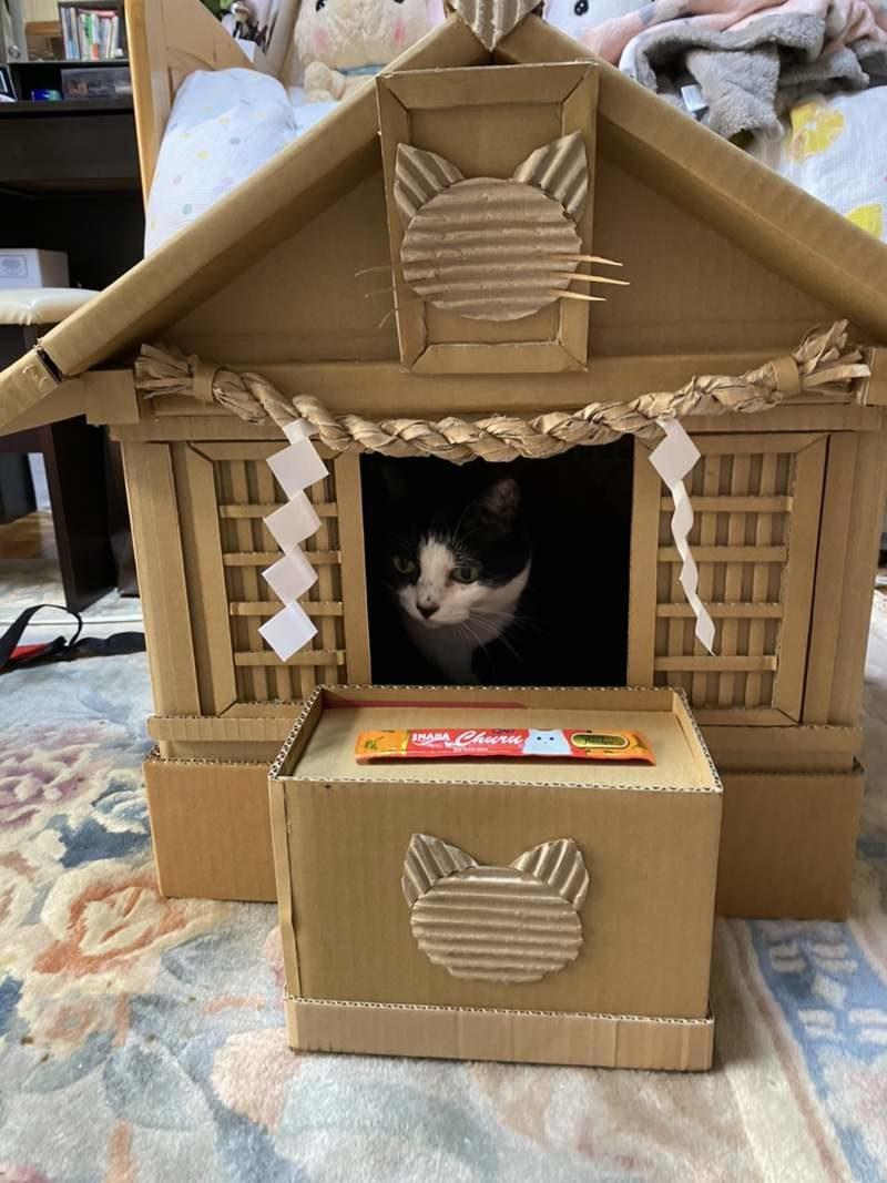 寵貓無極限!爸爸手做「紙箱貓神社」 想許願要先奉上罐罐❤