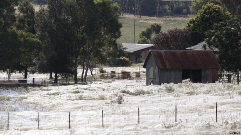 23張「活兩輩子也不一定看得到」驚人照片 小鎮被蜘蛛佔領了!