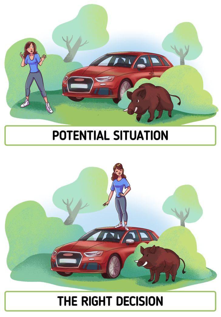 3個遇到「野生動物」的自救方法 不要「和野豬賽跑」更不要靠近小豬!
