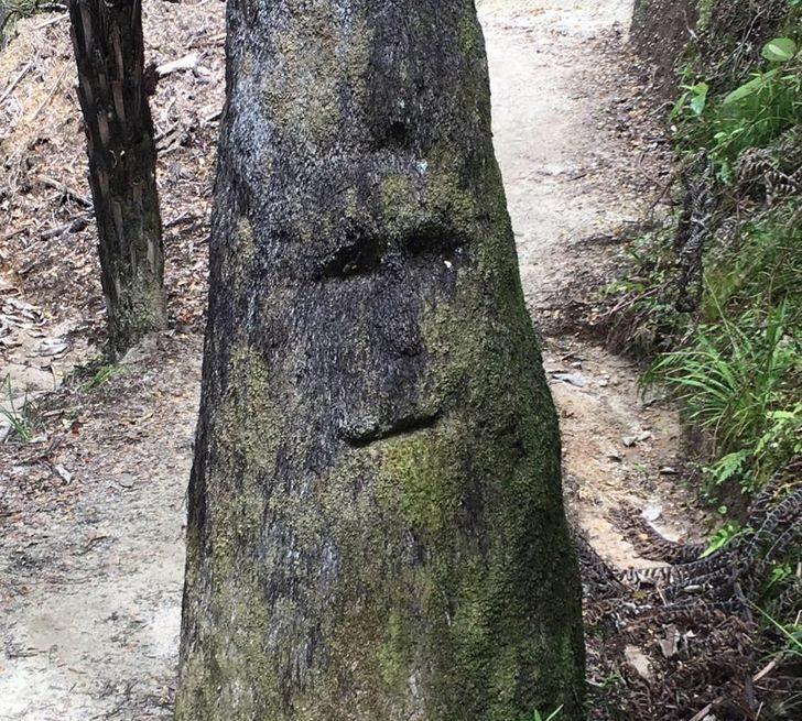 樹上有人臉?20張「可能上一輩子是人類」的驚奇日常畫面