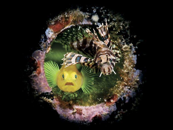 19張你絕對沒看過的「水下世界」 「整片草原」竟然是在海底!