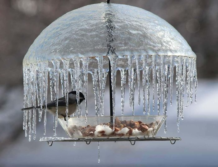 26張大自然的「無心之作」 雪地直接被捲成奶凍捲