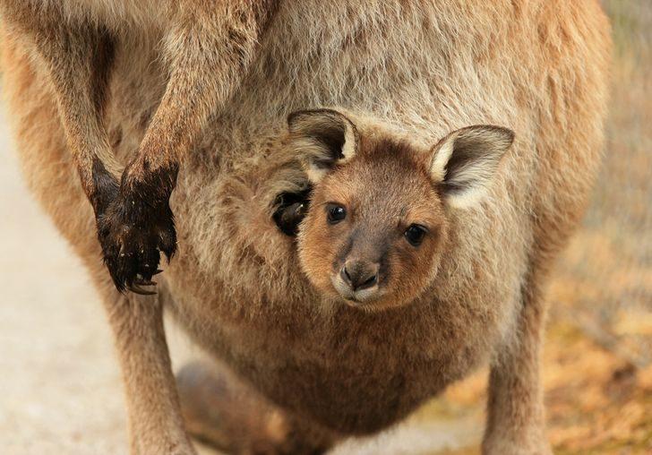 各種動物懷孕