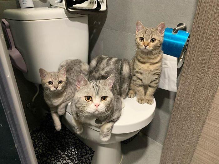 貓咪偷看洗澡