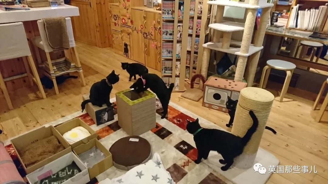 黑貓咖啡聽