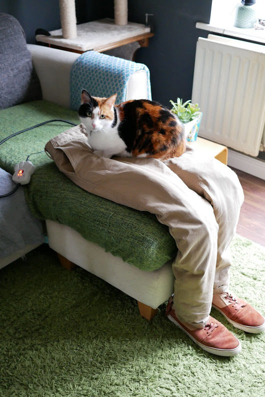 愛貓太愛「霸佔大腿」...她做「假腿」呼嚨還成功騙倒牠!