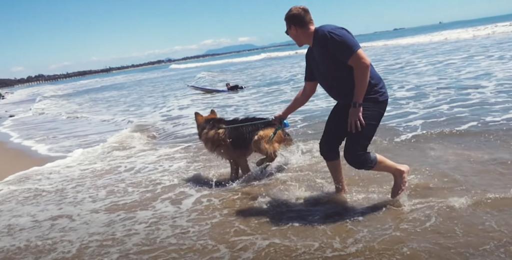 德國牧羊犬被救援後「第一次看海」 超興奮反應讓全場都想哭QQ