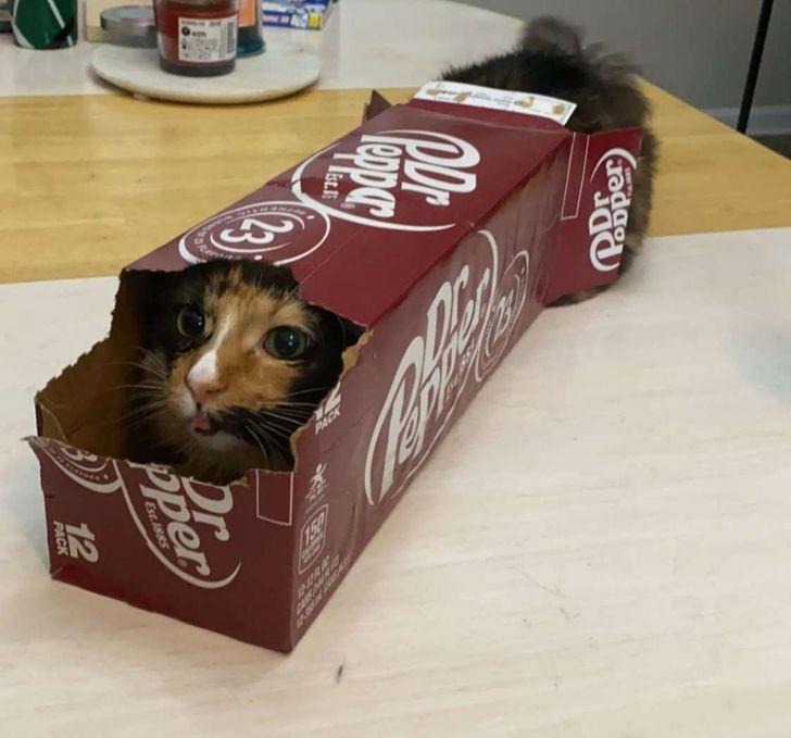 貓咪「硬要塞進紙箱」其實有原因 跟人一樣「愛逃避」的鴕鳥心態!