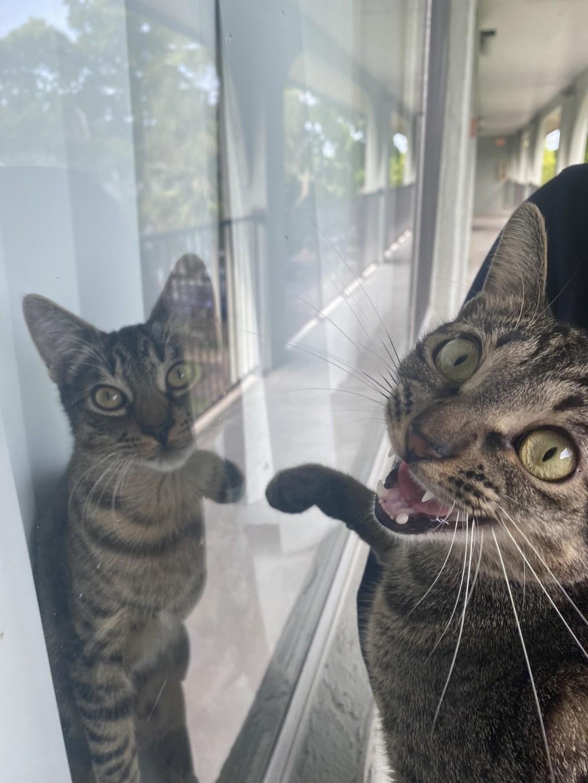 神撞臉!貓星人逛街驚見「另一個自己」 嚇到向主人求證
