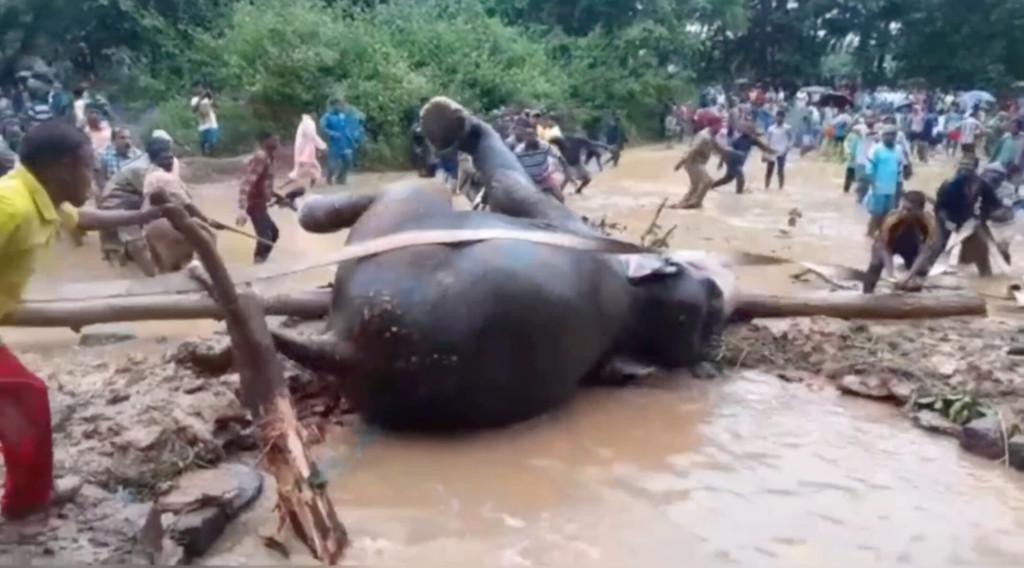 溺水大象只靠鼻子苦撐...村民動員「百人用繩索」送牠回家