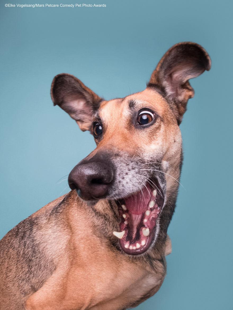 2020年「爆笑寵物攝影集」出爐 傻汪表演「輕功水上漂」嚇壞主人