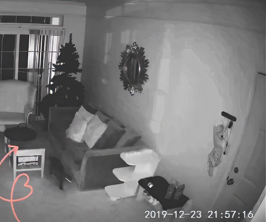 影/奴才監看「貓咪自己在家」畫面 噴淚尖叫:原來牠是愛我的!