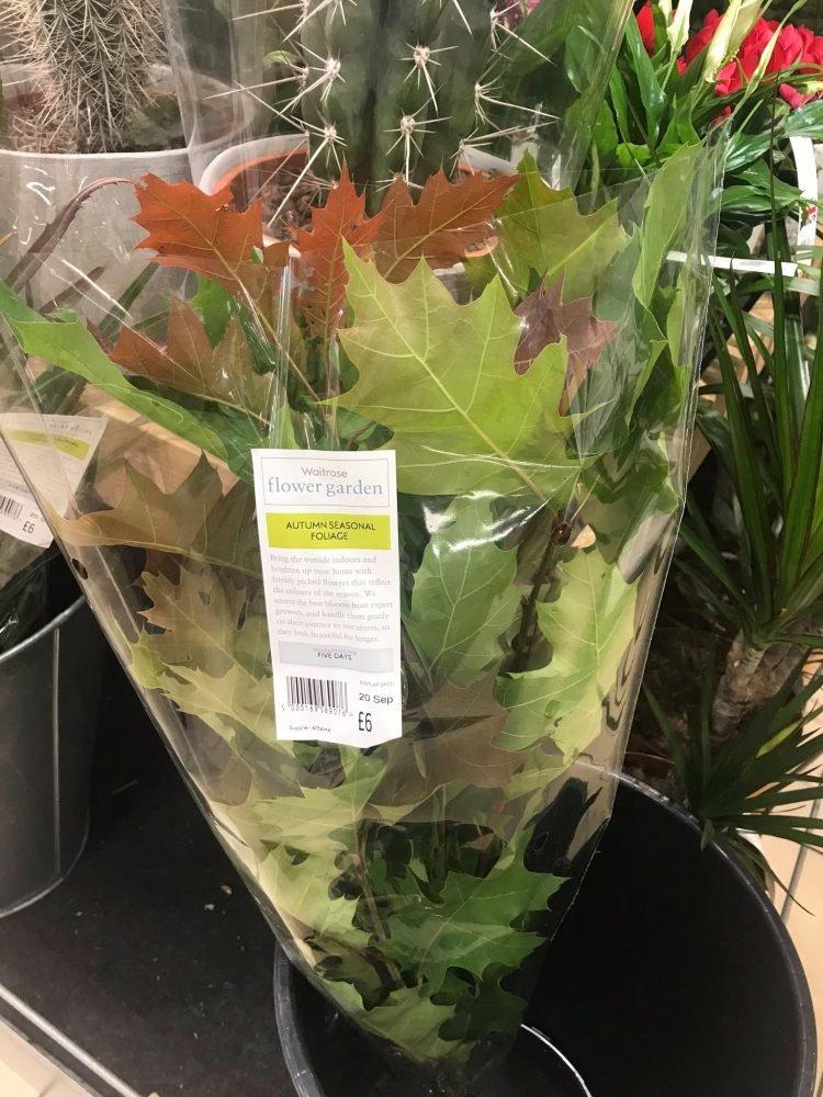 超市迎接秋天「開賣楓葉」一袋220元 網友:喝醉了嗎?