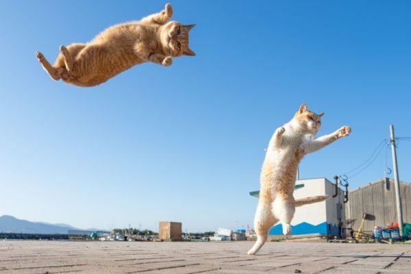 貓界功夫大師!一出拳「空中飛躍」輕盈落地:要嘗嘗本喵的波動拳?