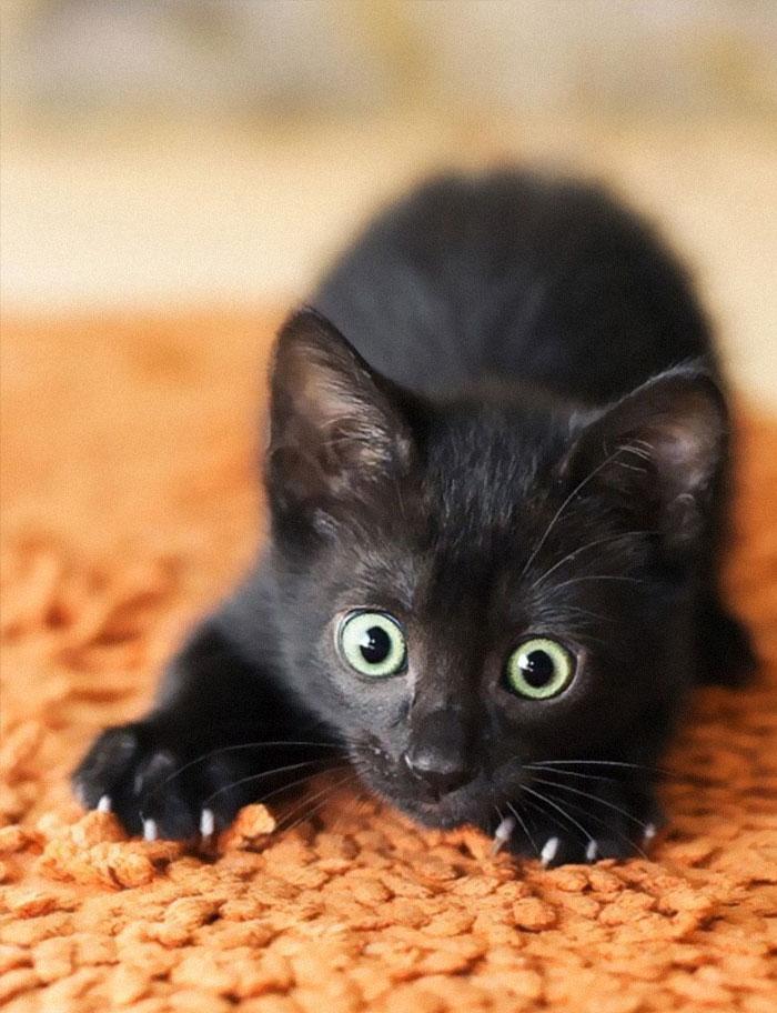 21隻「開啟捕獵本能」的萌貓 被主人拆穿「馬上裝死」!