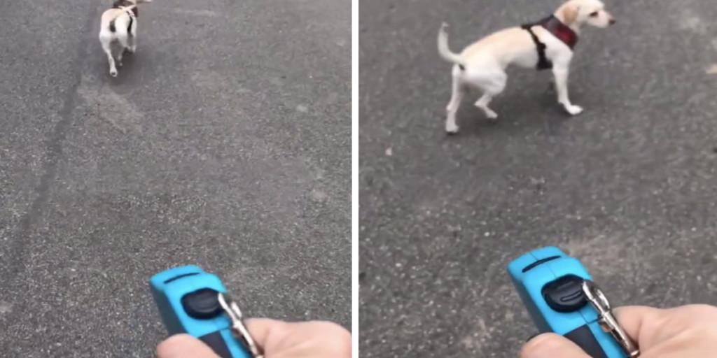 影/遛狗半路「牽繩斷掉」超緊張 主人裝冷靜「空氣牽狗」牠沿路跟回家