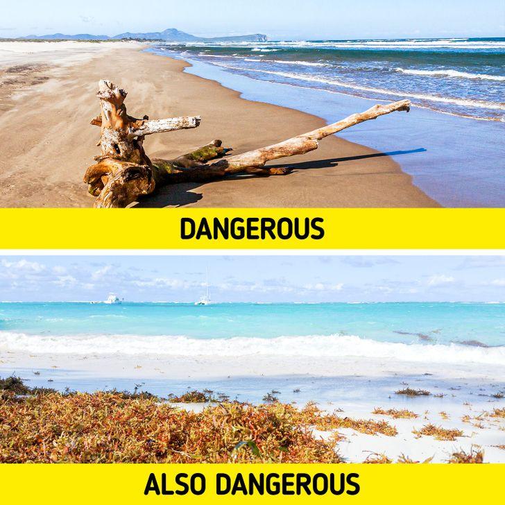 8種海邊會遇到的「超危險情況」 赤腳踩沙小心「被跳蚤產卵」!
