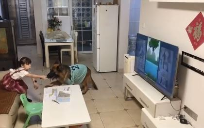小主人偷懶看電視 聰明汪一聽「用爪子拍桌」:把拔回來了!