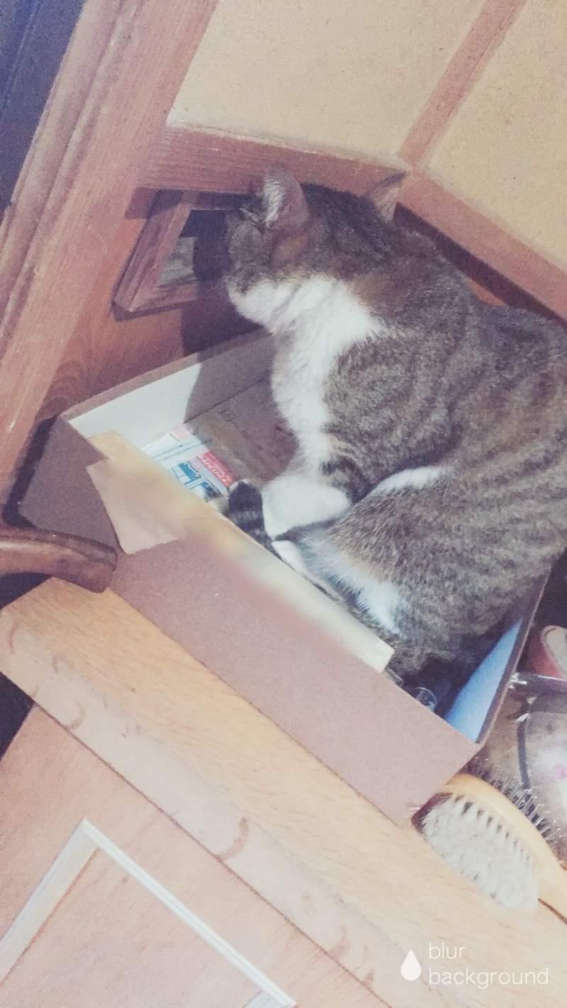 收不到信!郵差留下「投訴紙條」無奈控:你家的貓不讓我送信