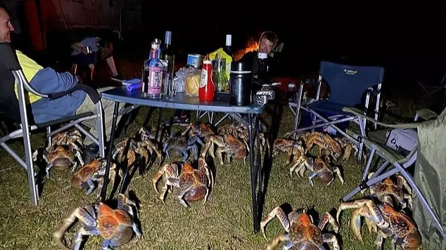 露營到一半被「棕色怪物軍團」包圍!還直接爬上桌子...全家卻超淡定