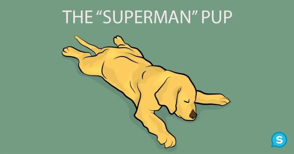 24個「狗狗行為表現」想告訴你的事 「吐舌看你」是最棒的訊號!
