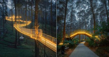 彷彿走進遊戲世界的「夢幻懸索橋」 夜晚點燈「2萬株蘭花」超浪漫!