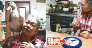 奶奶收編小鴨互動超有愛 揭黑暗嗜好後:小鴨表情太驚恐