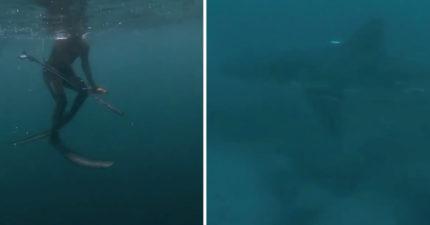 驚險一瞬間!帶魚叉潛水捕魚...腳下浮現「超巨型身影」差點沒命