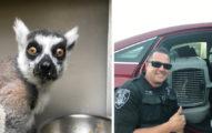 5歲就當柯南!聰明童大喊「有狐猴」 幫警察抓到動物大盜