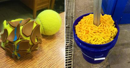 19個餓到把什麼「都看成食物」的人 以為小烏龜是柳橙太母湯