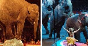 不是謀財道具!法國新法「禁用野生動物表演」 海生館不能再養虎鯨、海豚