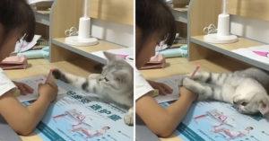 陪我玩!霸道貓出絕招「阻止主人寫功課」 最後靠「嘴巴」完勝