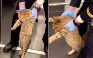 貓咪「搭火車逃票」秒被抓包 列車長「直接請下車」乘客超心疼