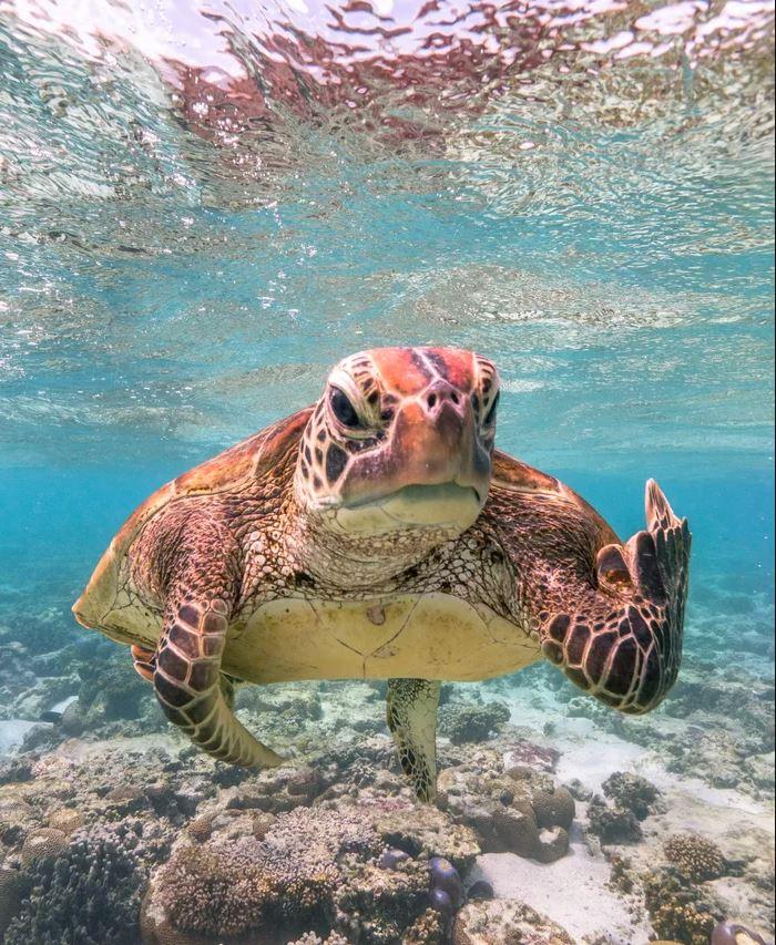 「憤怒海龜」獲野生動物搞笑首獎!攝影師發表心得嘆:保育很重要