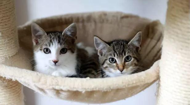 想交貓朋友?研究證實「對牠們眨眼」最有效...關鍵在「節奏」!